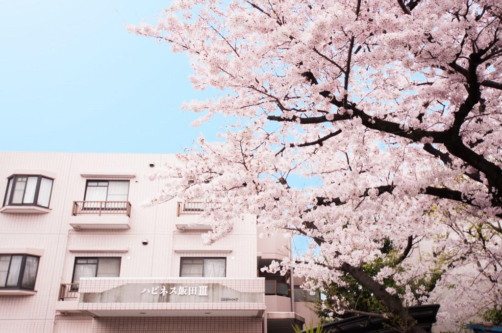 happiness_3_sakura_0002_2