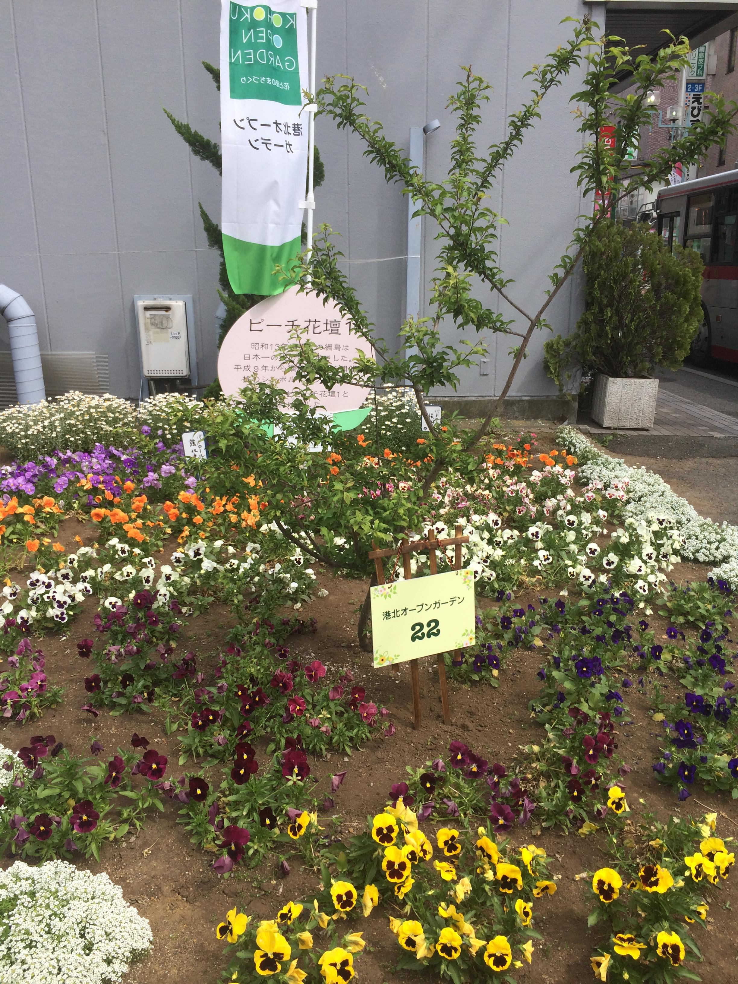 ピーチ花壇
